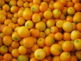 image for Mis adorados Kumquats